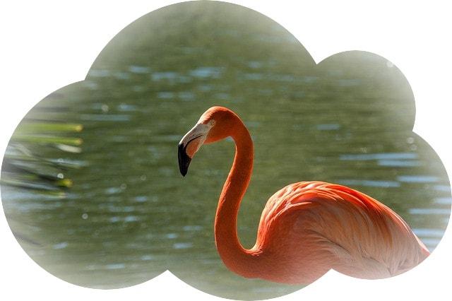 Сонник фламинго 🌙 К чему снится фламинго во сне