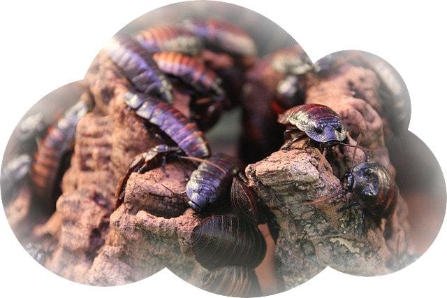 К чему снятся тараканы много и живые
