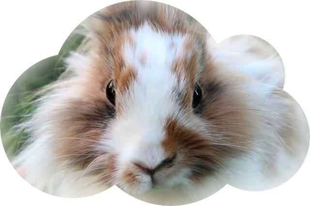 Согласно универсальному соннику кролики во сне считаются признаком начала семейных отношений для девушки, которая состоит в паре уже долгое время.