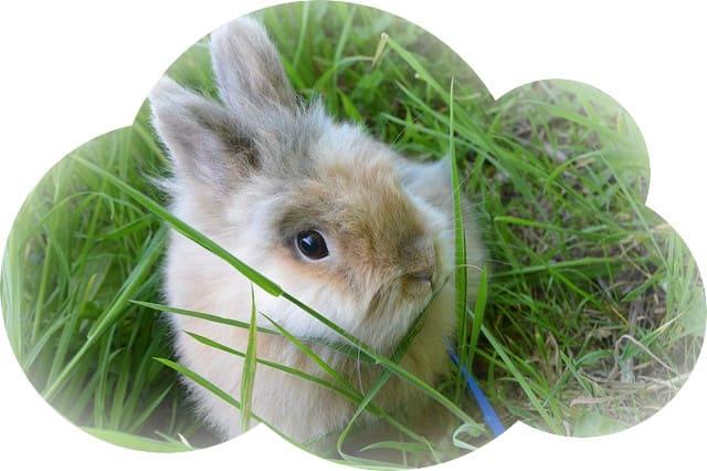 Если приснился заяц или кролик, который спокойно сидит, у человека будет возможность увеличить свой достаток.