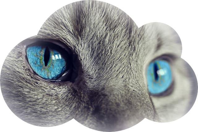 Кошки во снах означают либо болезни и переживания, либо такие человеческие черты и отношения, как привязанность, притяжение и интимные связи.