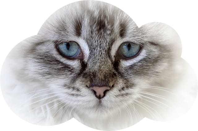 Сонник умерший кот 🌔 К чему снится кот, который умер